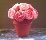 Pot of cupcake roses
